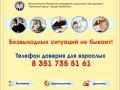 В Челябинске пройдет акция против домашнего насилия