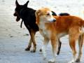 Информация об отлове безнадзорных животных в Челябинске